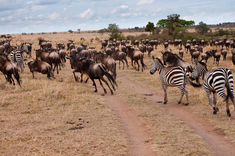 Нацпарки Кении