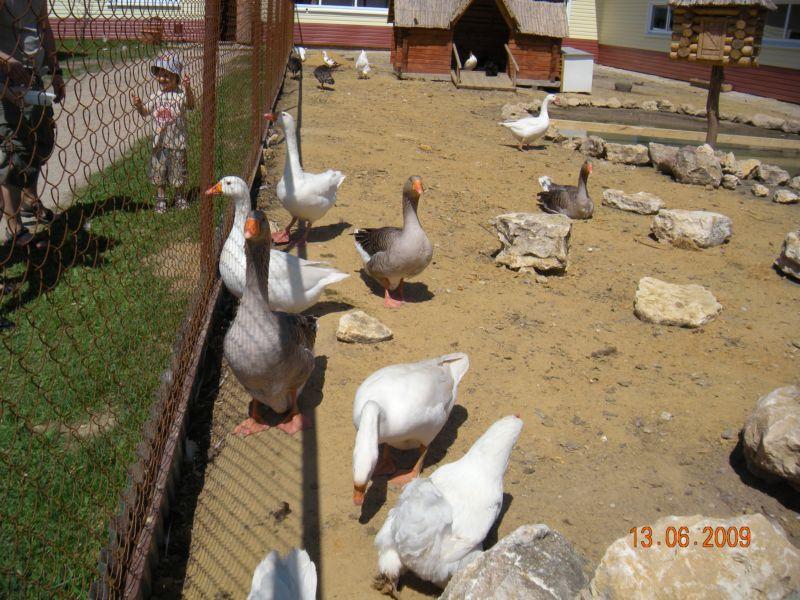 Страусиная ферма и Приокско-Террасный заповедник. Парк Птиц.