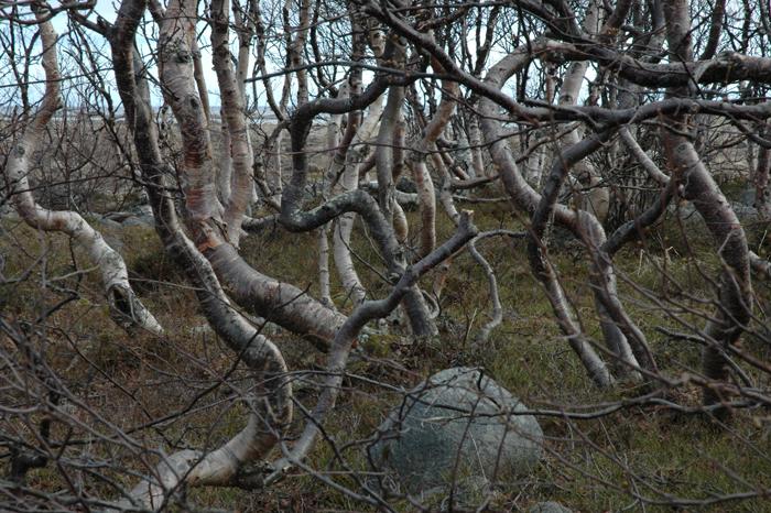 И сегодня мы будим создавать это русское дерево.  Береза из бисера Birch Bead.  Высота нашей березы Birch Bead...
