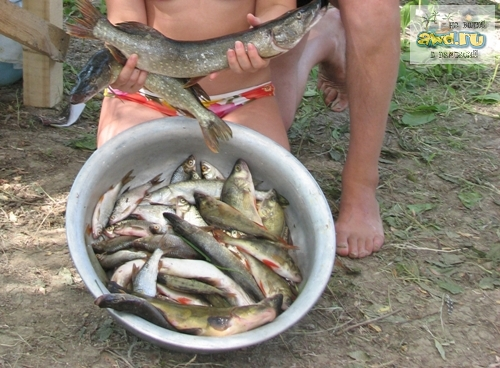 Рыболовные трофеи, у кого что.