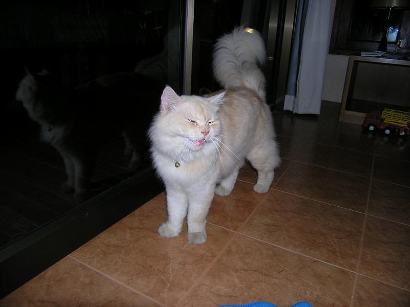 Самуи-Тао-Краби-ПиПи-БКК с дитём.Янв-фев 2010.Много фоток.