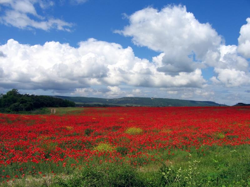 Пейзажи миодзаки в большом разрешении
