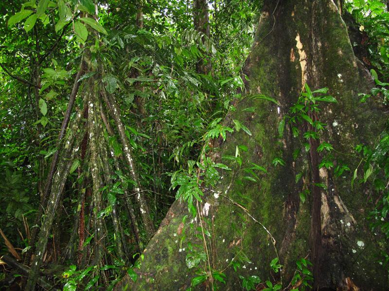 Выжить на Амазонке