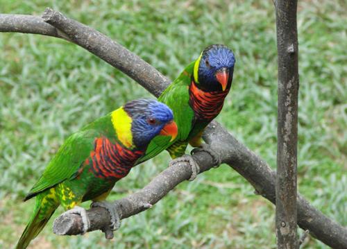 В парке птиц два круга - верхний (большой) и нижний.  Мы прошли оба...