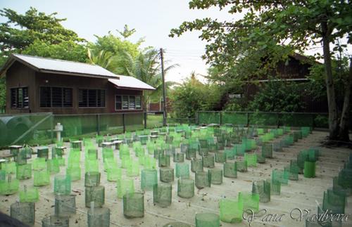 Черепахи - Рантау -Абанг ,Малайзия.