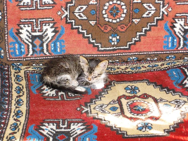 http://foto.awd.ru/data/media/73/IMG_0583.jpg
