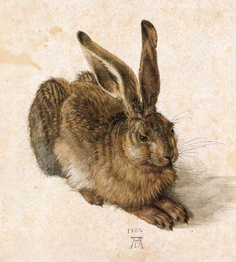 http://foto.awd.ru/data/media/87/Durer-hare.jpg